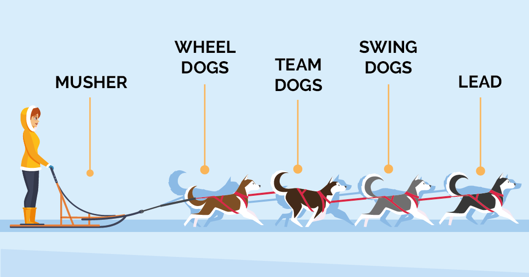 trineo con perros