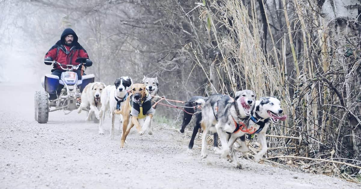 trineo con perros mushing y canicross