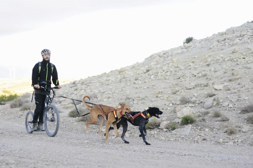 entrenamiento bikejoring