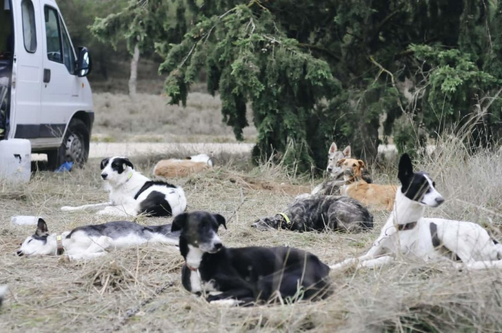 entrenar con tu perro de mushing