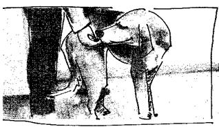 recuperación de los perros 1