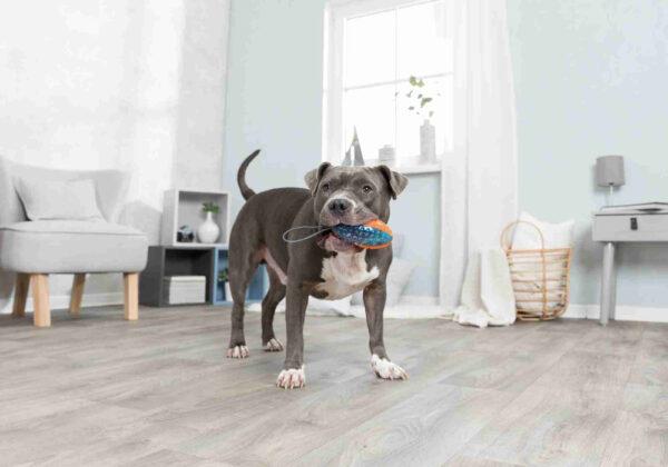 pelota de rugby con cuerda para perros