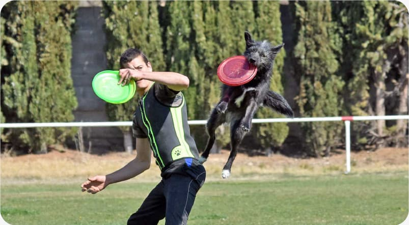 disc dog y mushing