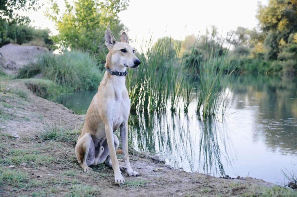 excursión con nuestros perros