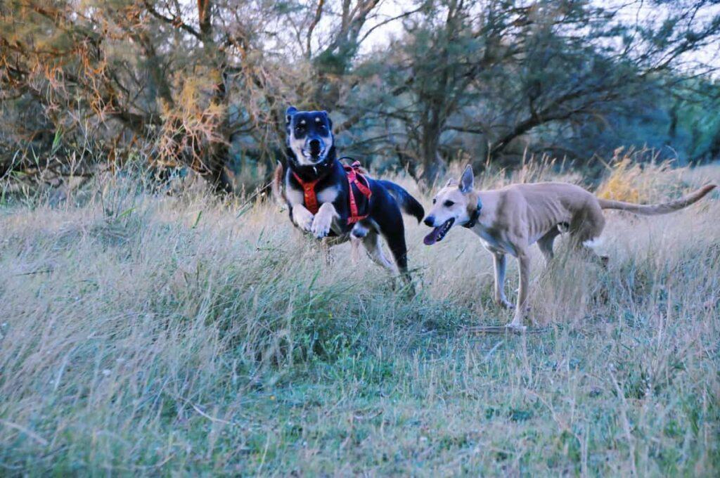 estado físico excursión con nuestros perros