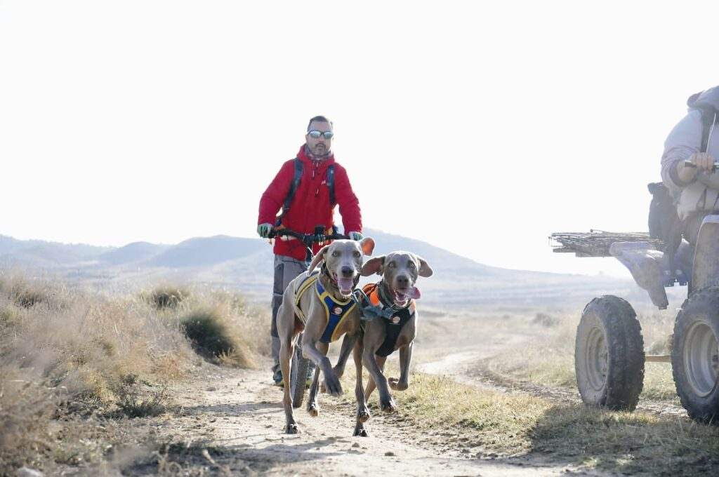 beneficios del mushing