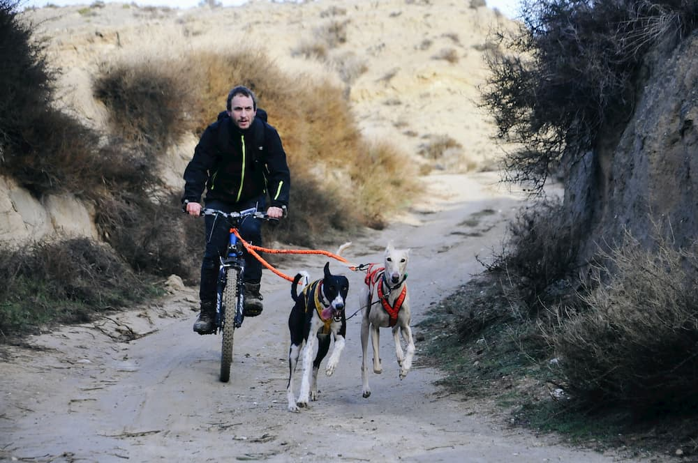 beneficios del mushing en jalon