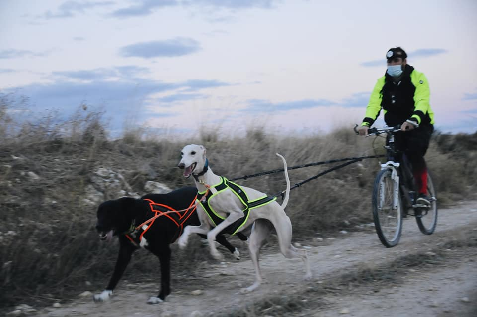 enseñar a tu perro a tirar en mushing