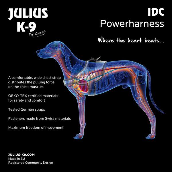 Arnés Juliu's IDC 18