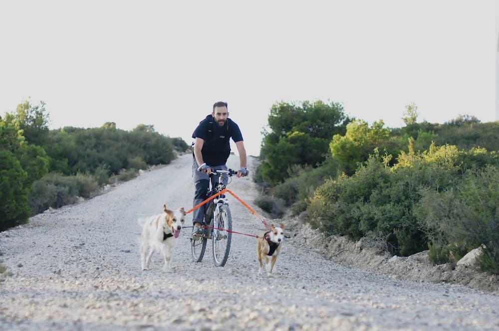 ansiedad en perros bikejoring