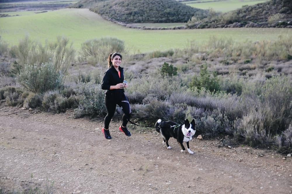 ansiedad en perros canicross