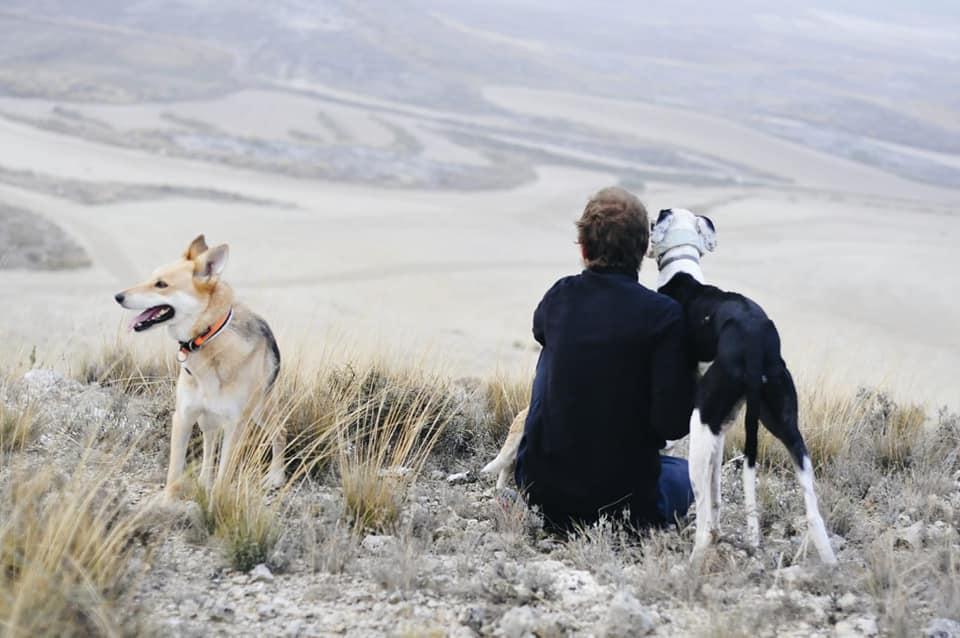 consejos-para-saber-que-perro-adoptar