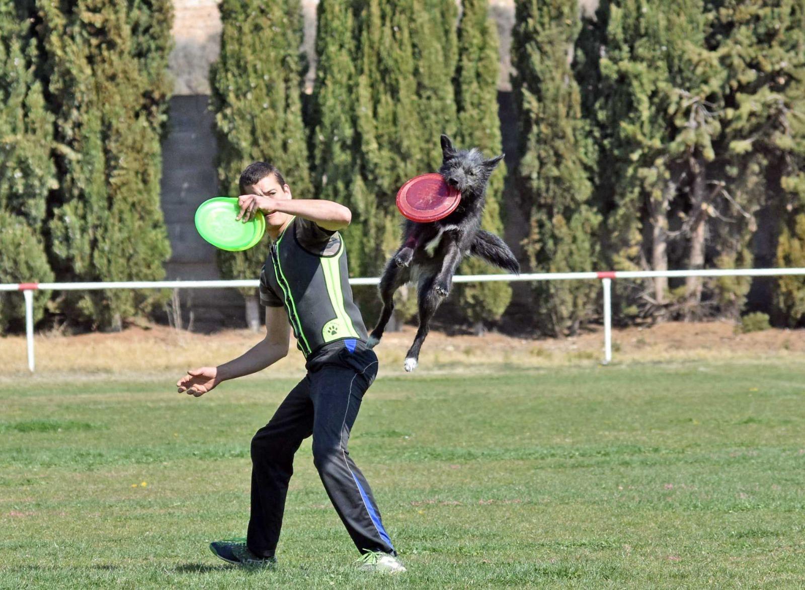 Deporte con tu perro: Disc Dog 1