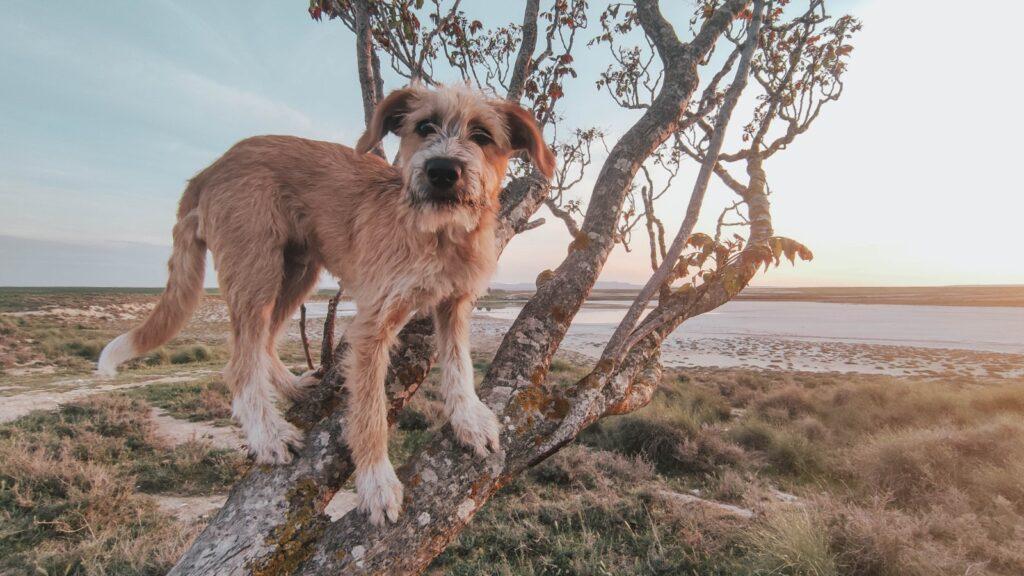 Las mejores 4 rutas para hacer con tu perro en Zaragoza