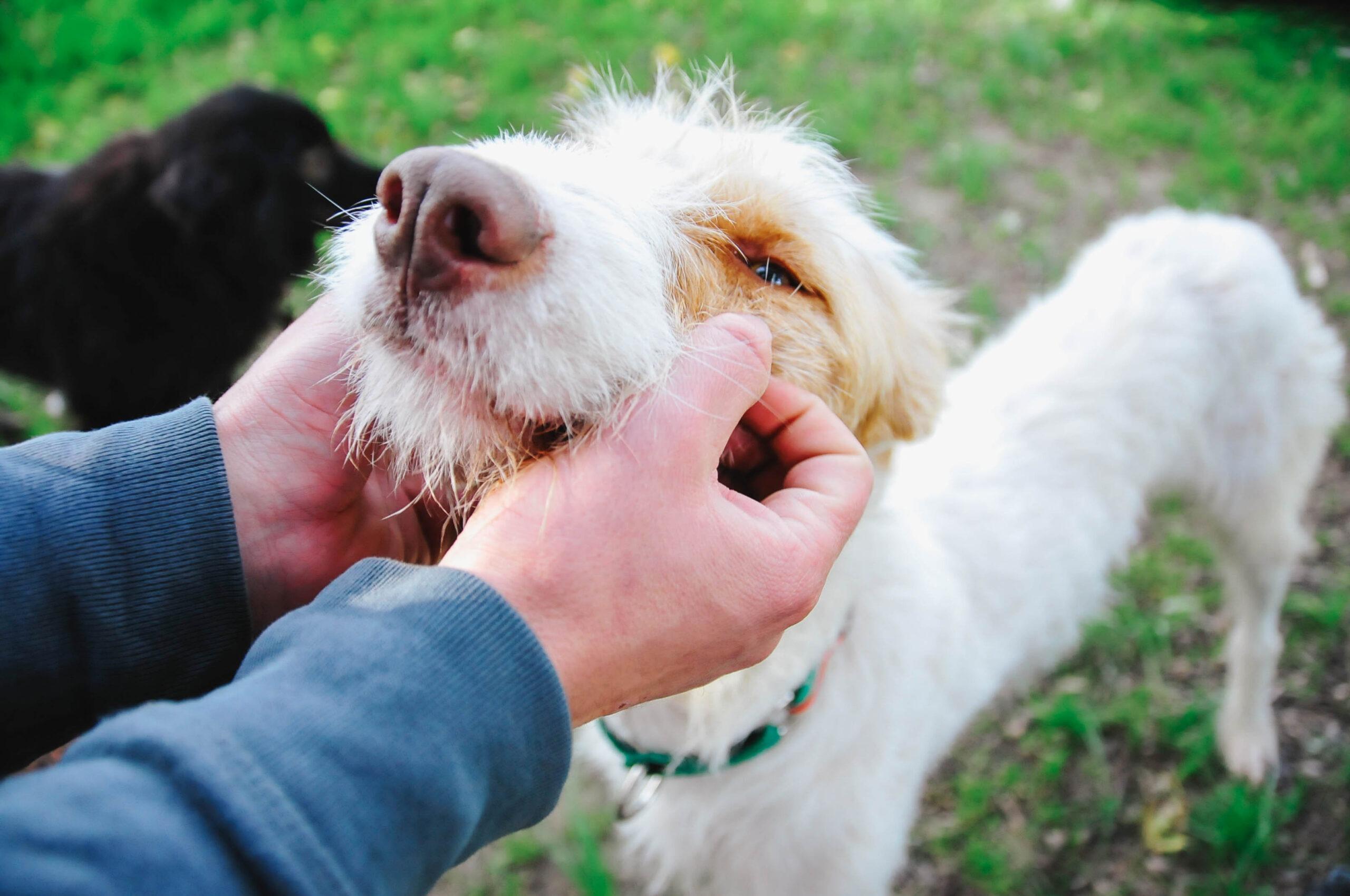 Los primeros días en casa de un perro adoptado. 1